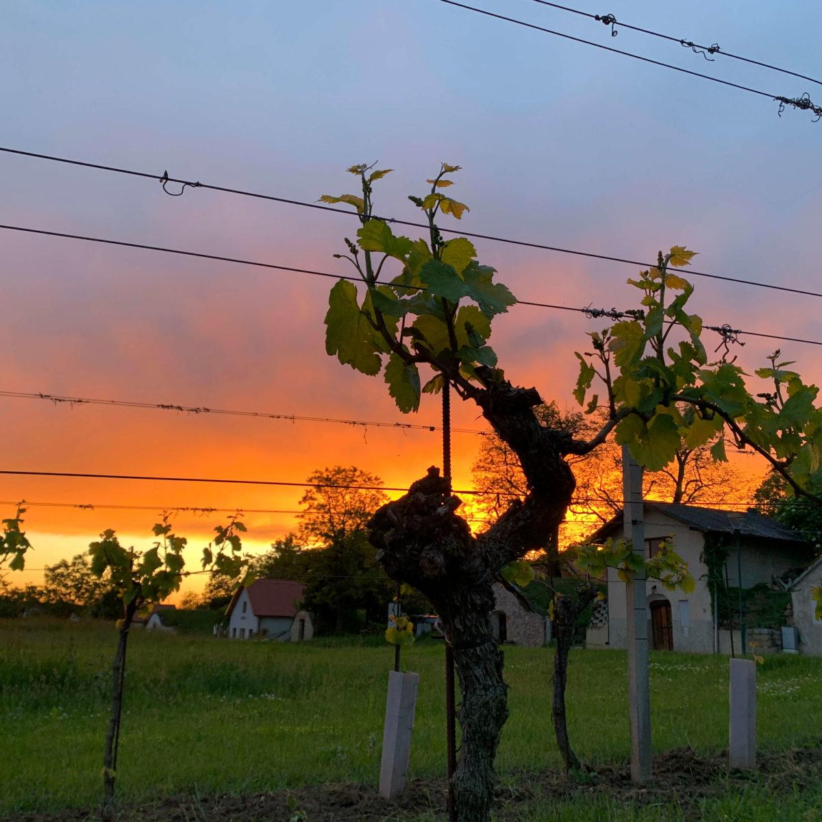 Weinbau9 c ae